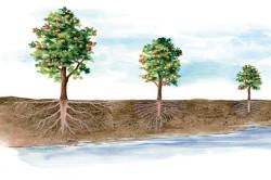 Определение глубины залегания подземных вод по растениям